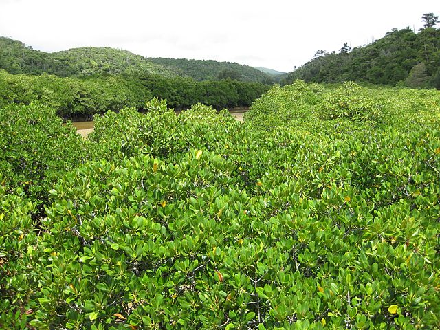 gesashi-bay-mangrove-forest-in-northern-okinawa